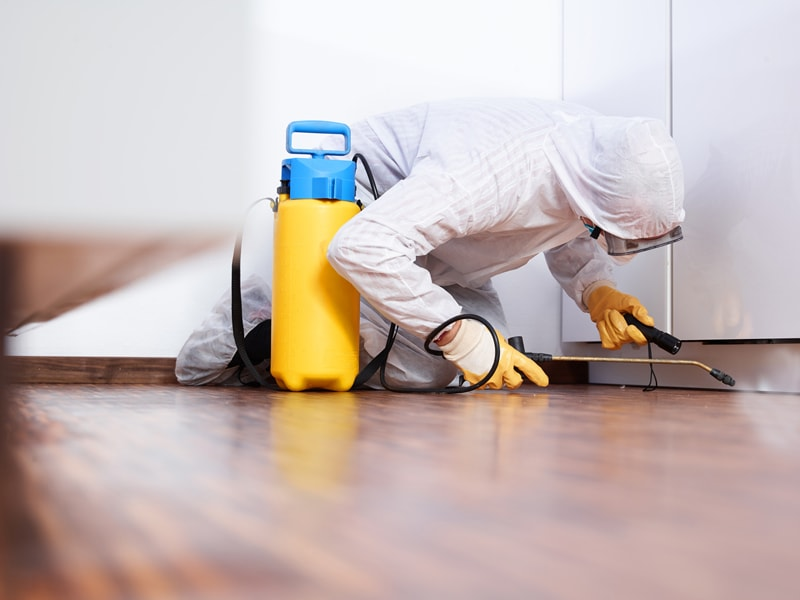 Follow Steps To Find Best Pest Control Experts