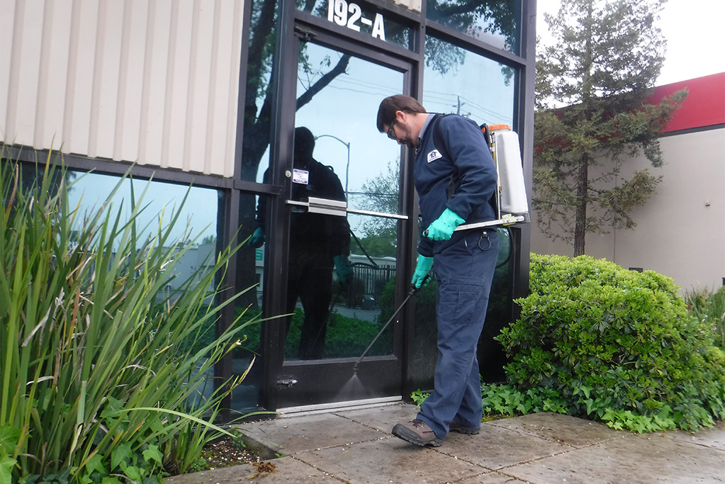 How To Take Action When Pests Infest Your Property?