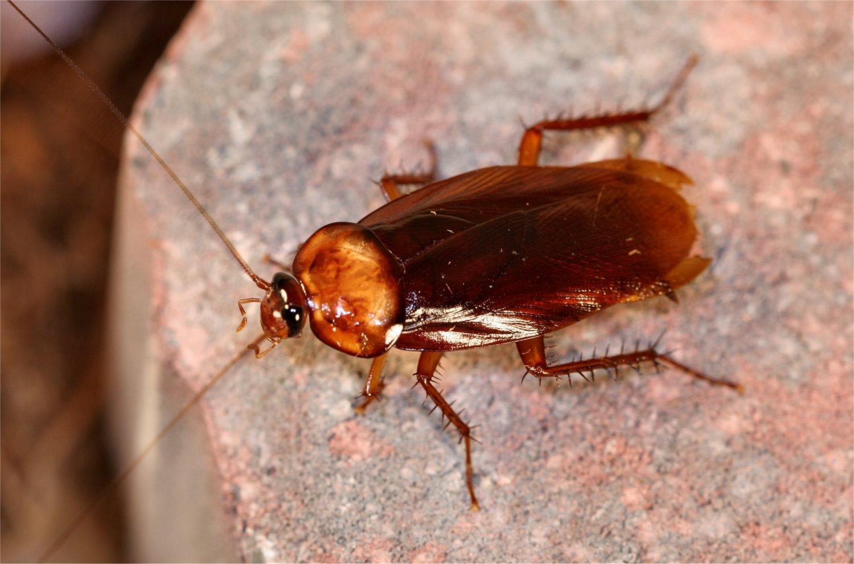 cockroaches control dubai
