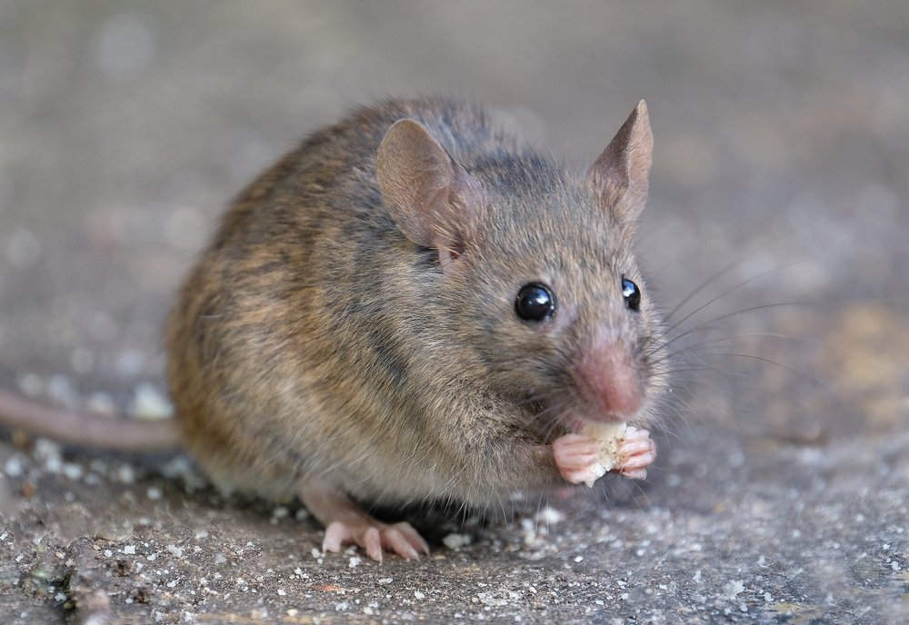 Pests that can affect your healthiness and living environment