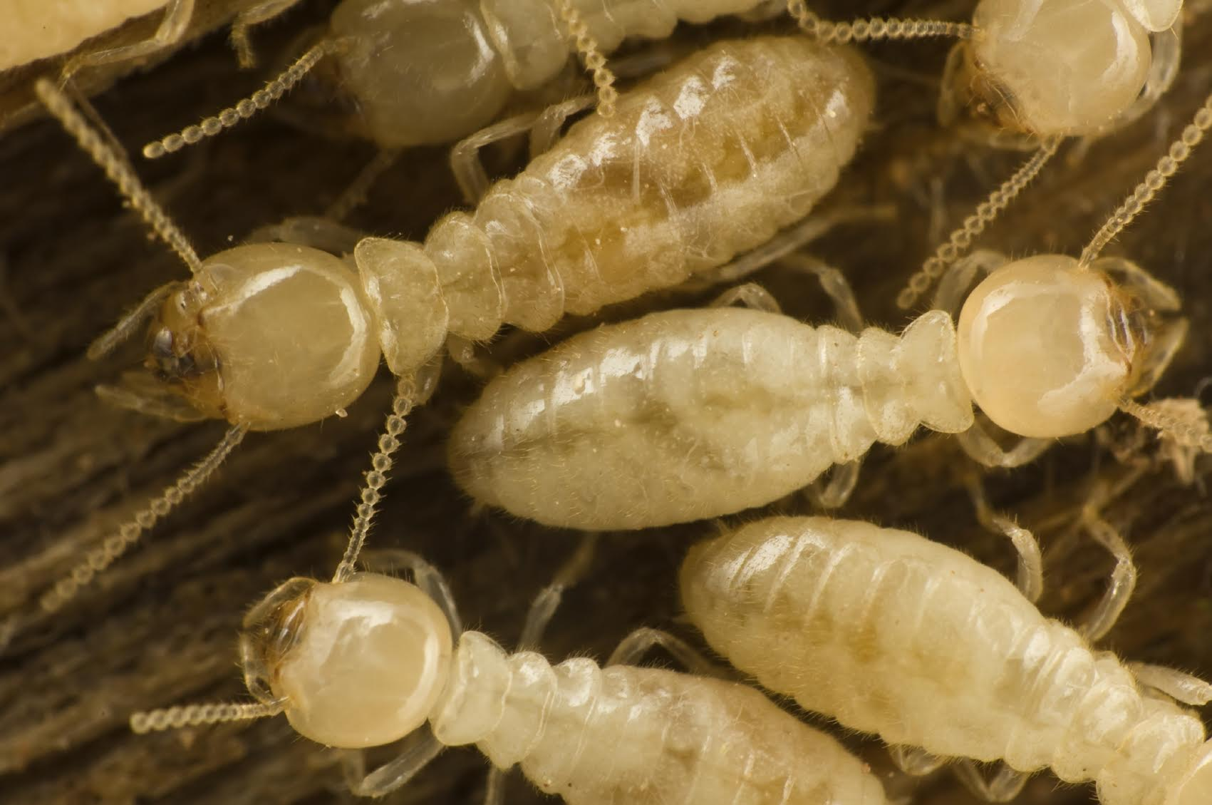 10 Ways To Keep Your Home Termite Free