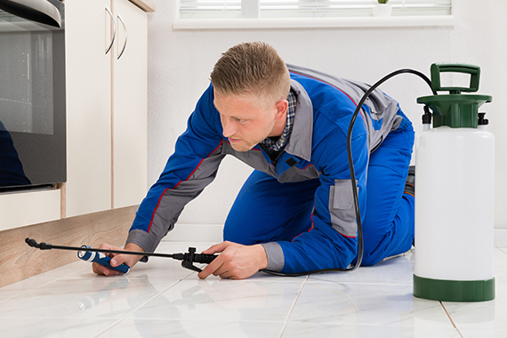 Pest Control: Important Tips and Guidelines