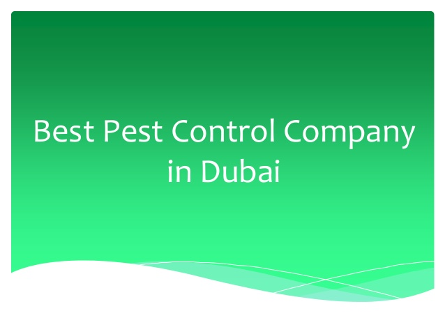 Remove pests forever with the best pest control in Dubai