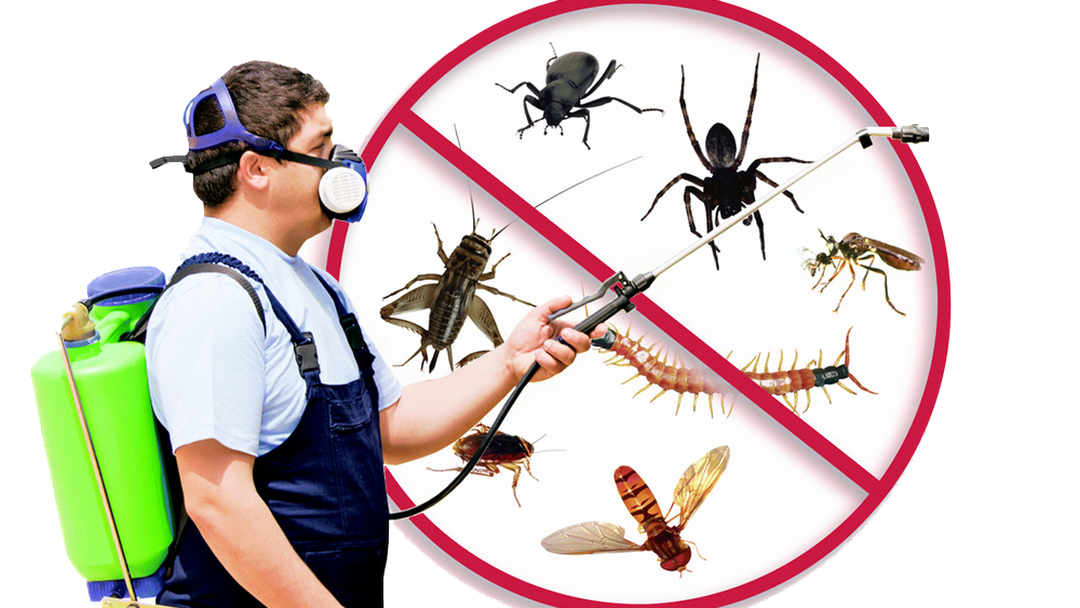Hire the best pest control company in Dubai to exterminate pests immediately