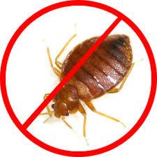 Bed bugs pest control Dubai