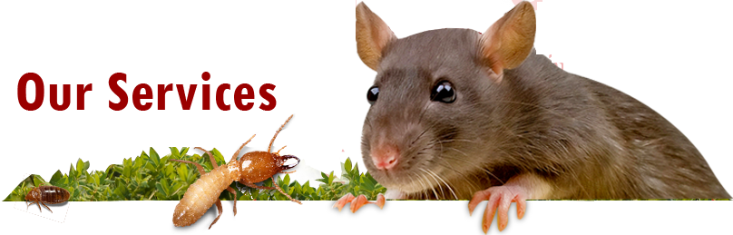 Guaranteed Pest Control Services