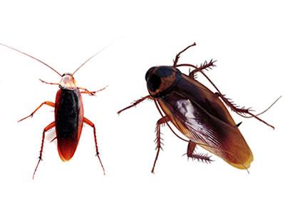 Pest Control Umm Suqeim