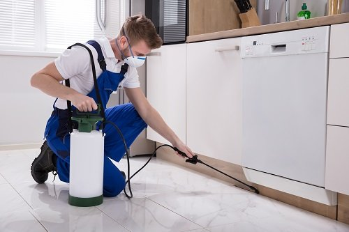 Engaging Professionals To Take Care Of Your Pest Control