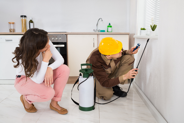 Pest Control Tips for Your Home