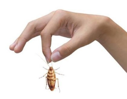 Detecting And Controlling Crawling Insects And Pests