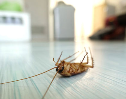 How Often Must Pest Control Be Done