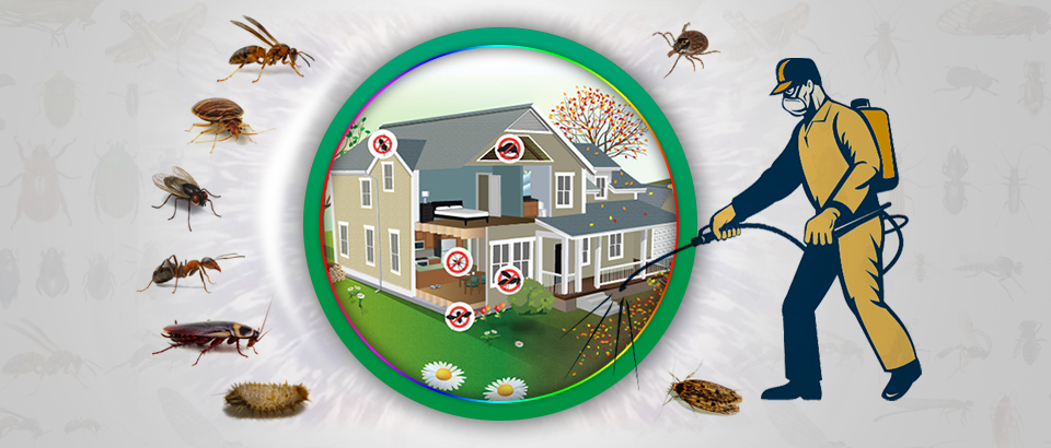 Opt for the top-notch pest control Dubai jlt to kill pests forever from your home