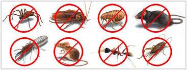 pest control companies in Dubai, pest control services in Dubai pest control Dubai jlt, pest control jlt