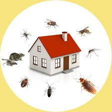 Pest Control Bur Dubai