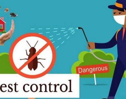 Best pest control in Dubai