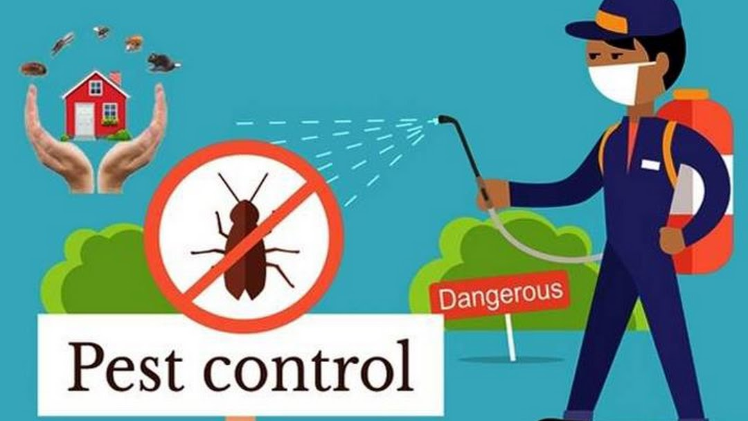 Best pest control in Dubai