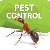 Dubai municipality pest control